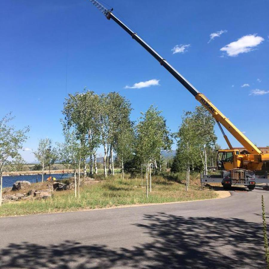 tree placement crane service